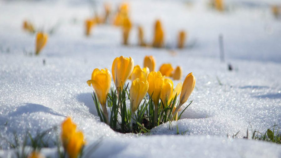 Five Signs Spring is Not Coming to Ohio