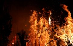 Fires continue to blaze throughout the Amazon Rainforest