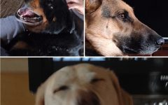 All the dogs I've owned: a memoir